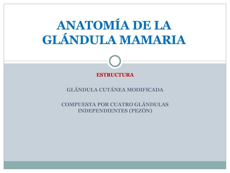 Calaméo - Anatomía de la glándula mamaria y composición de la leche