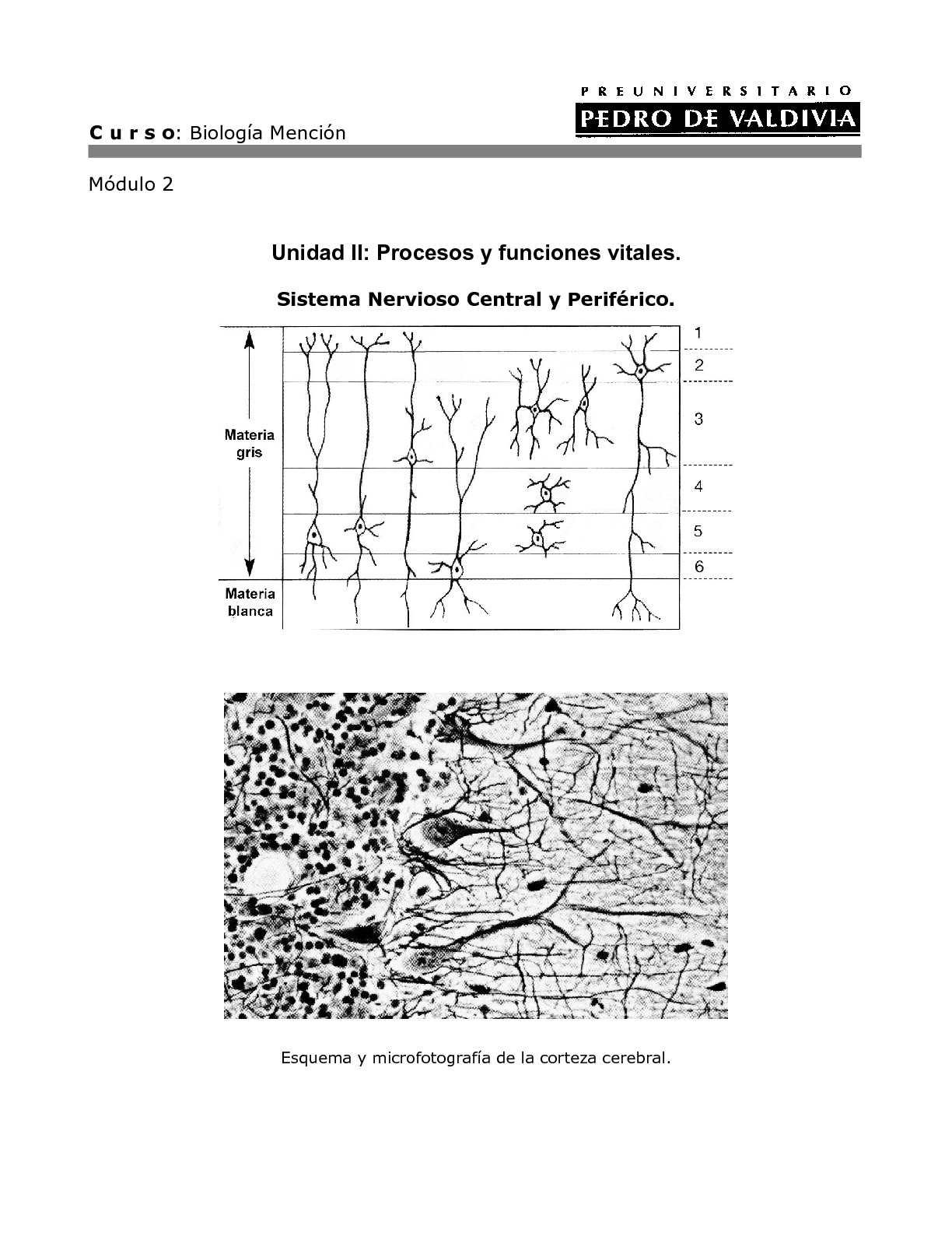 Calaméo - Sistema Nervioso