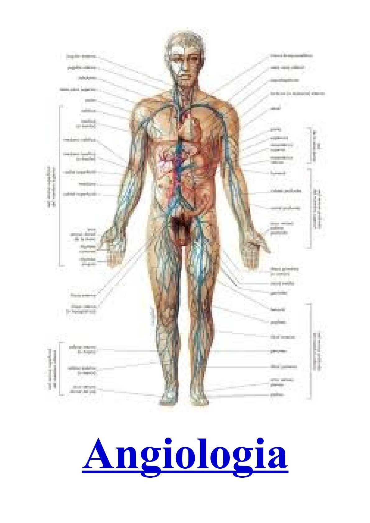 Calaméo - Saúde - Angiologia