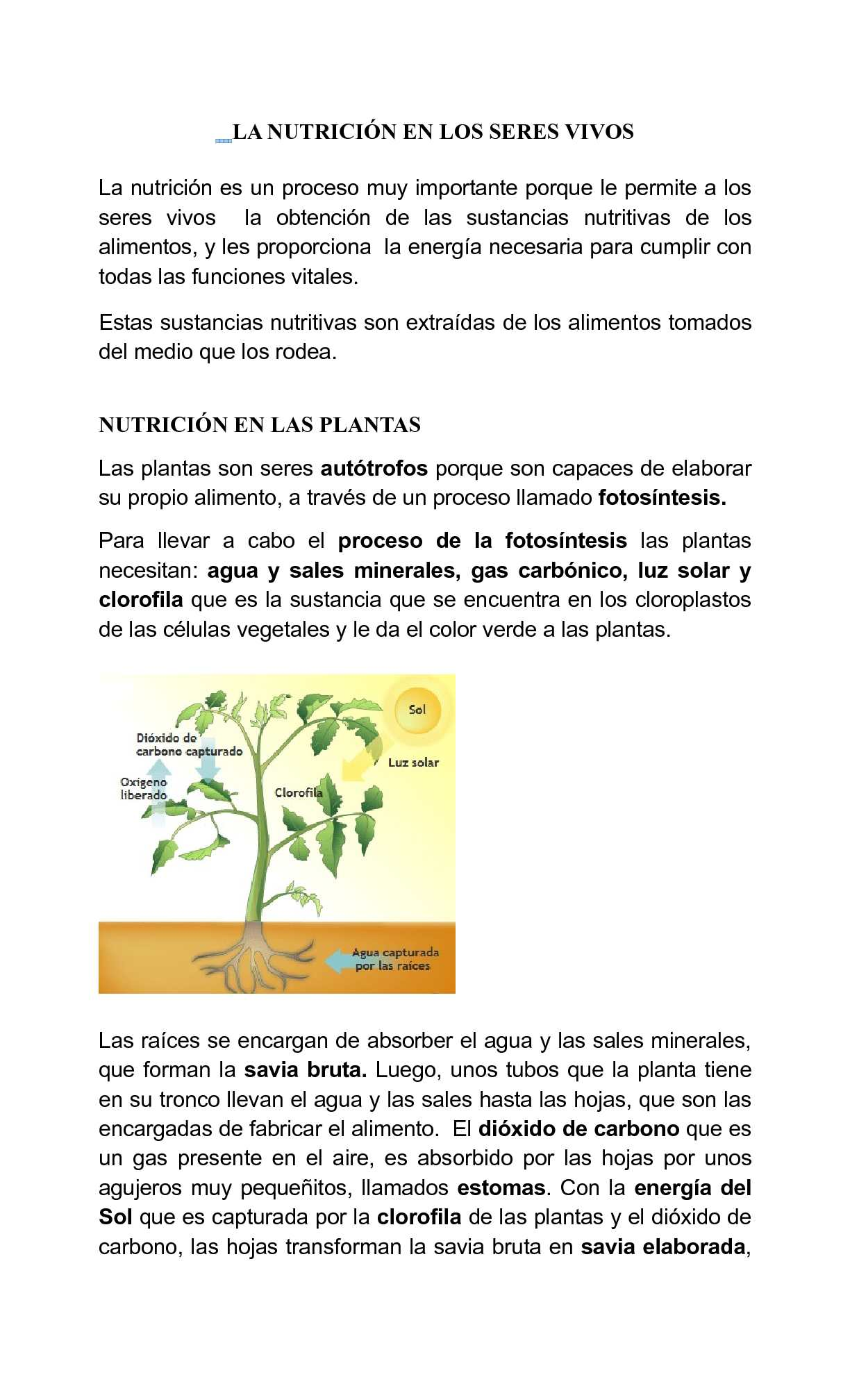 La Nutrición en los seres vivos
