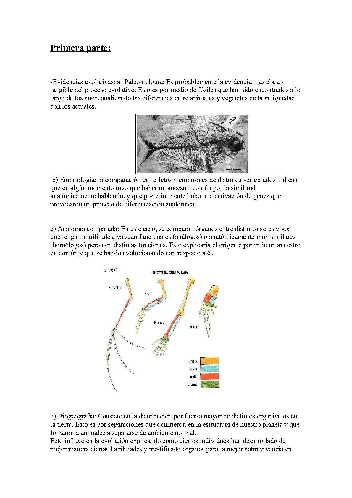 Calaméo - Evolución