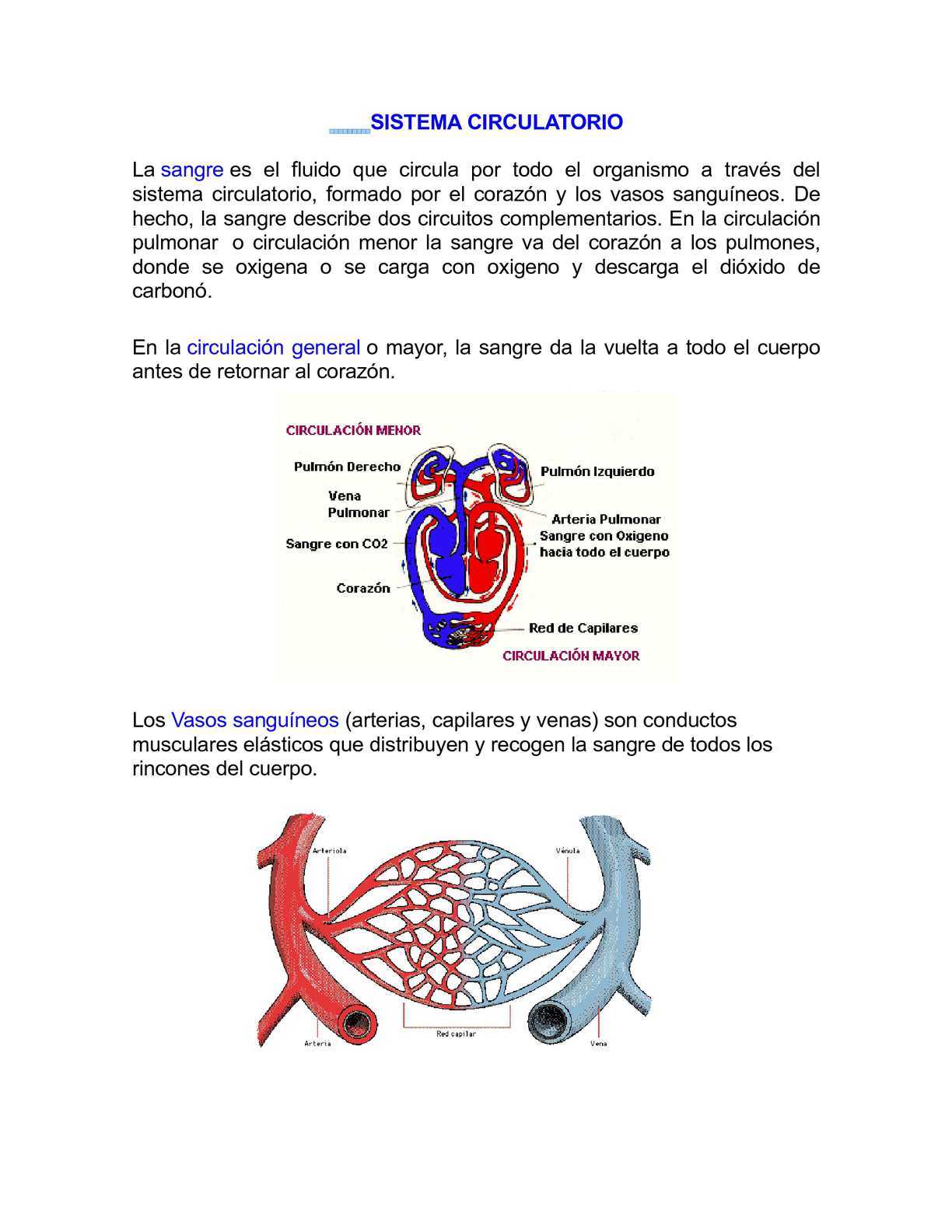 Circuito Sanguineo : Calaméo sistema circulatorio