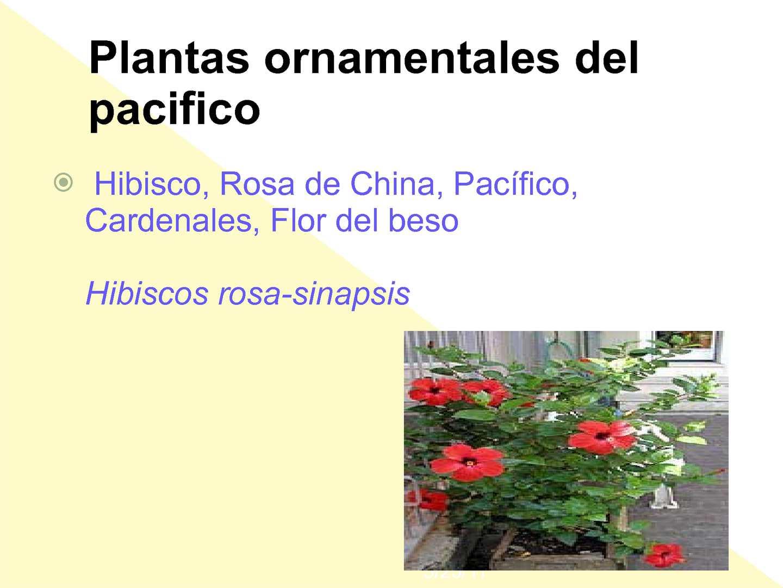 Calam o plantas del pacifico for Que son plantas ornamentales