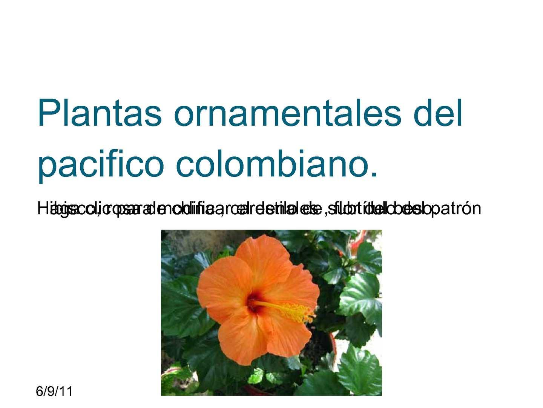 Calam o plantas ornamentales del pacifico for Que significa plantas ornamentales