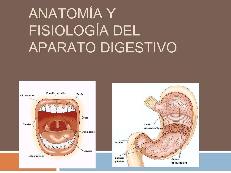 Calaméo - Aparato Digestivo Electivo