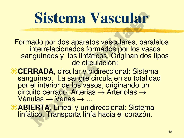 Circuito Vascular : 1º bac tema 10 nutricion calameo downloader