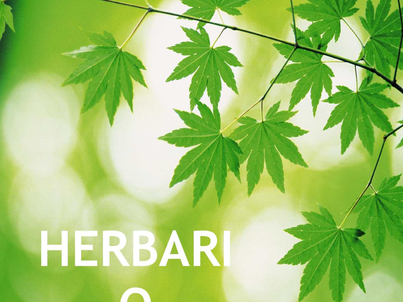 Calam o herbario jard n bot nico for Jardin botanico medicinal