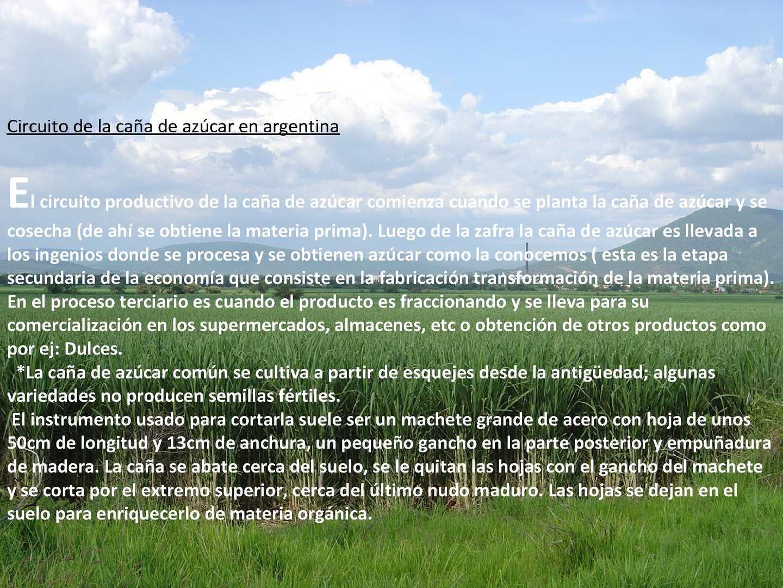 Circuito Productivo De La Caña De Azucar : Calaméo naturaleza y salud caña de azucar