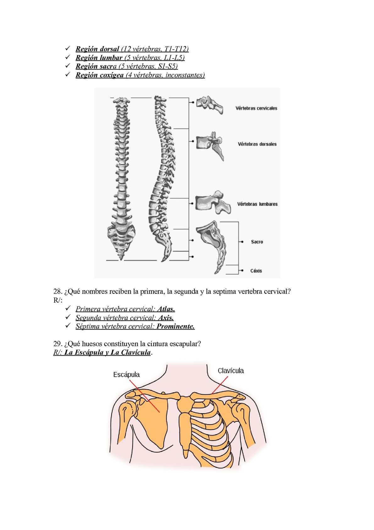 Moderno Anatomía Región Cervical Bosquejo - Imágenes de Anatomía ...