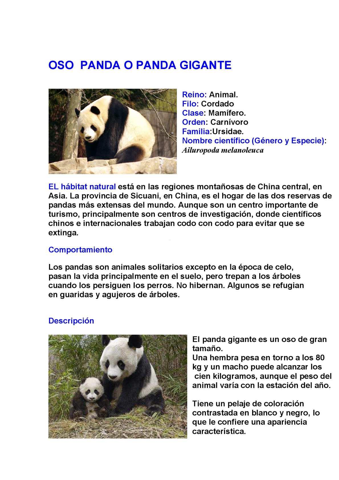 calam o fichas de campo oso panda y delf n