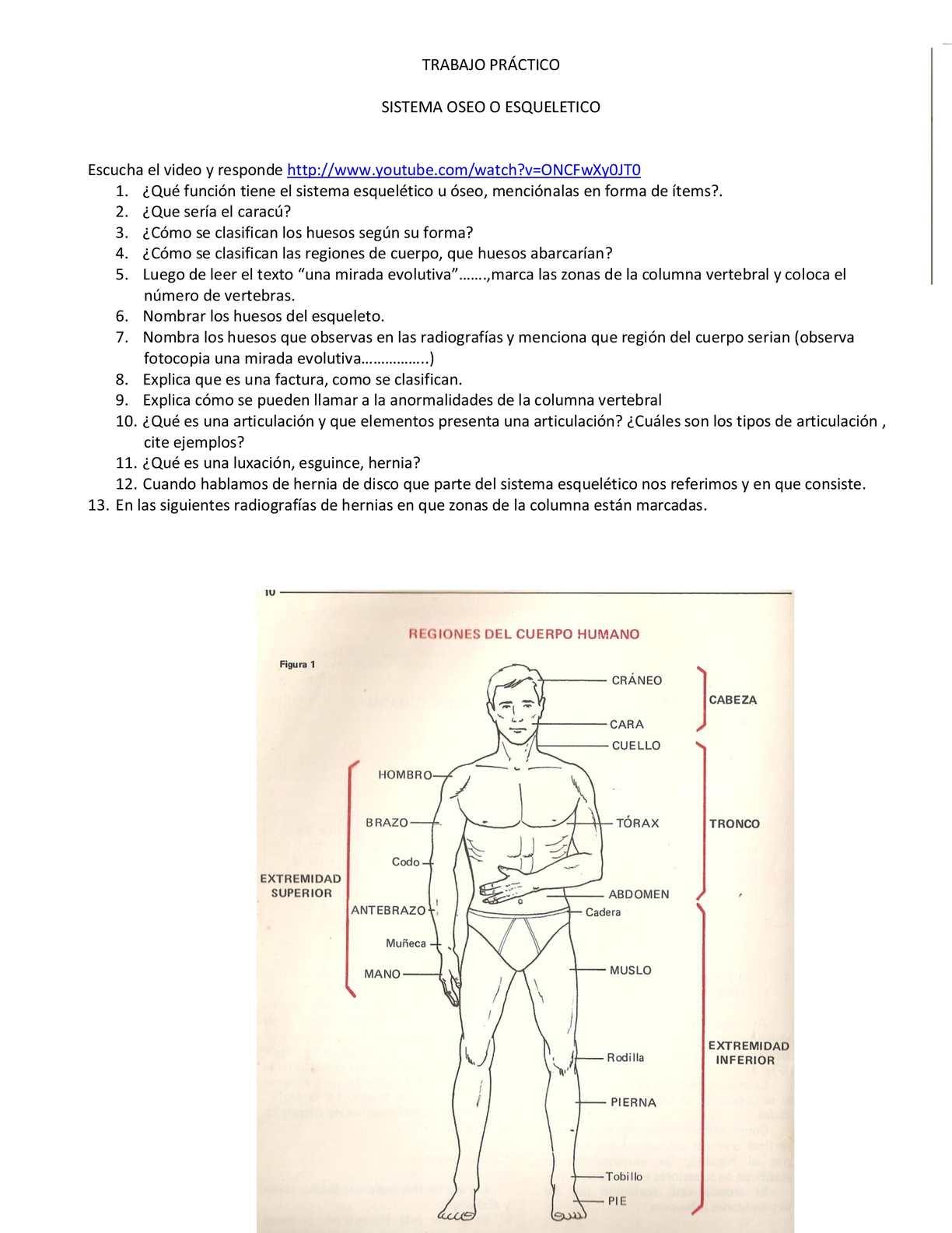 Calaméo - Trabajo Practico Sistema Oseo