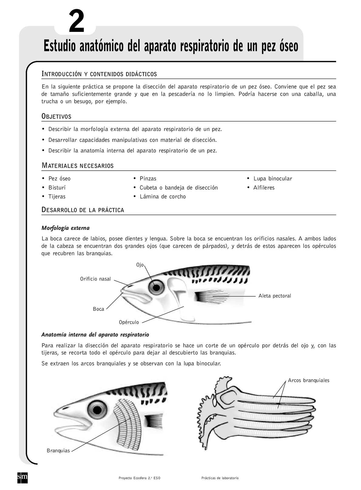 Calaméo - Aparato respiratorio de un pez óseo
