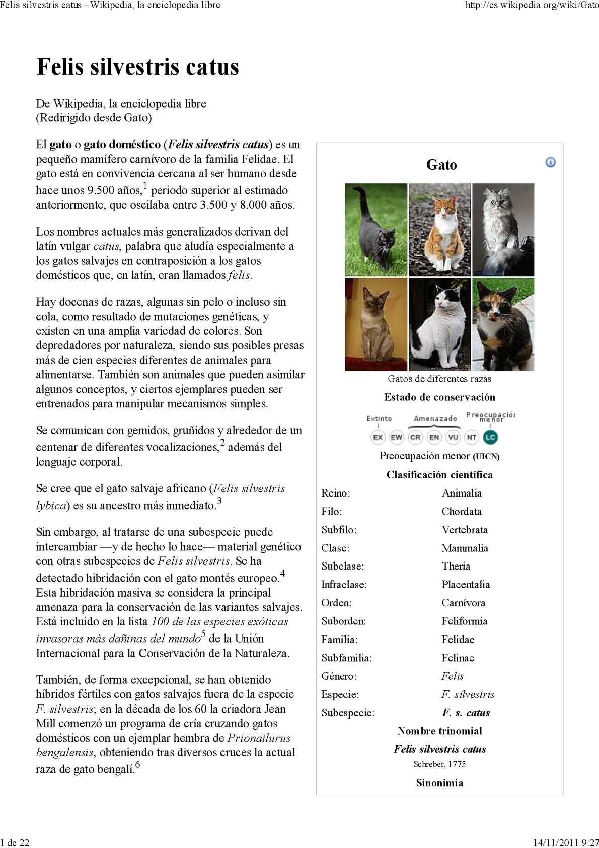 Calaméo - Gatos