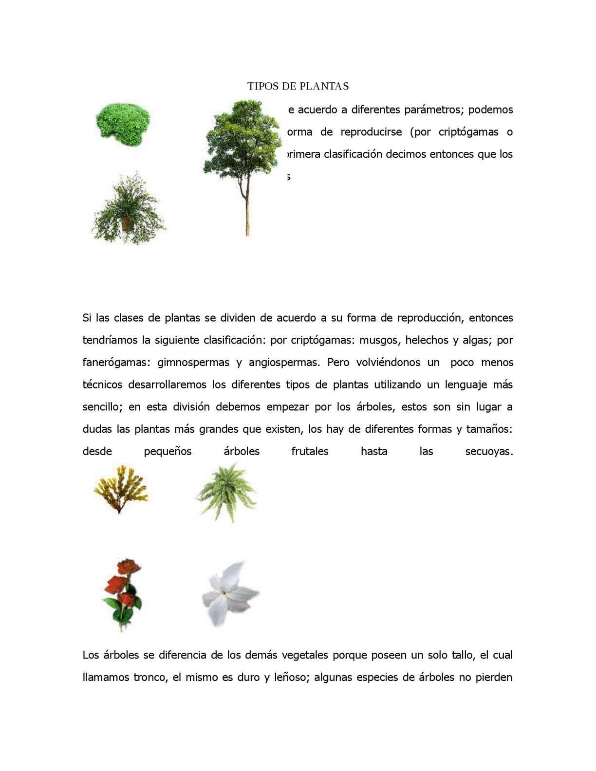 Calaméo  CLASIFICACION DE LAS PLANTAS