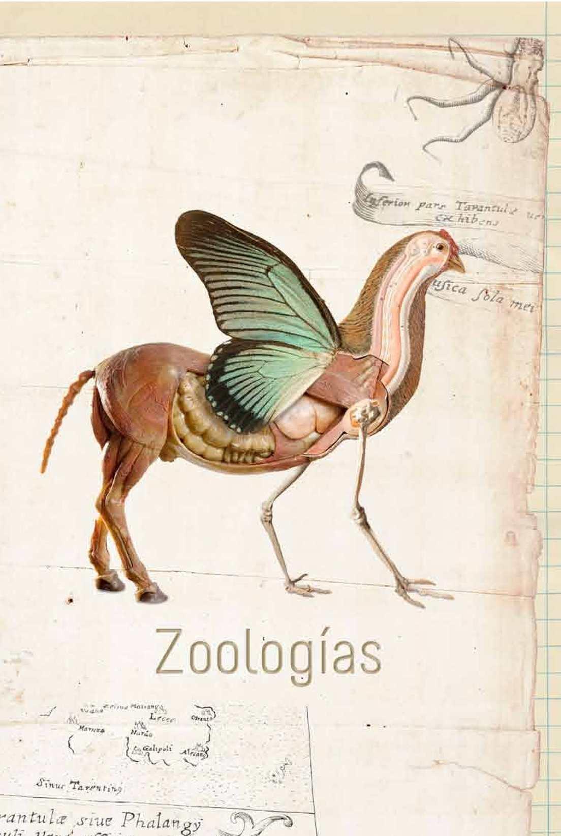 Calaméo - Zoologías. c arte c