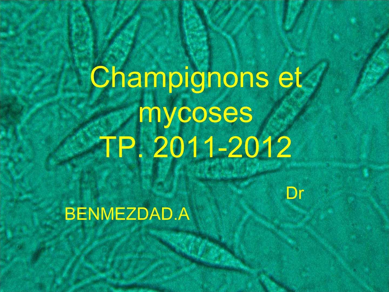 Calaméo - champignons et mycoses TP