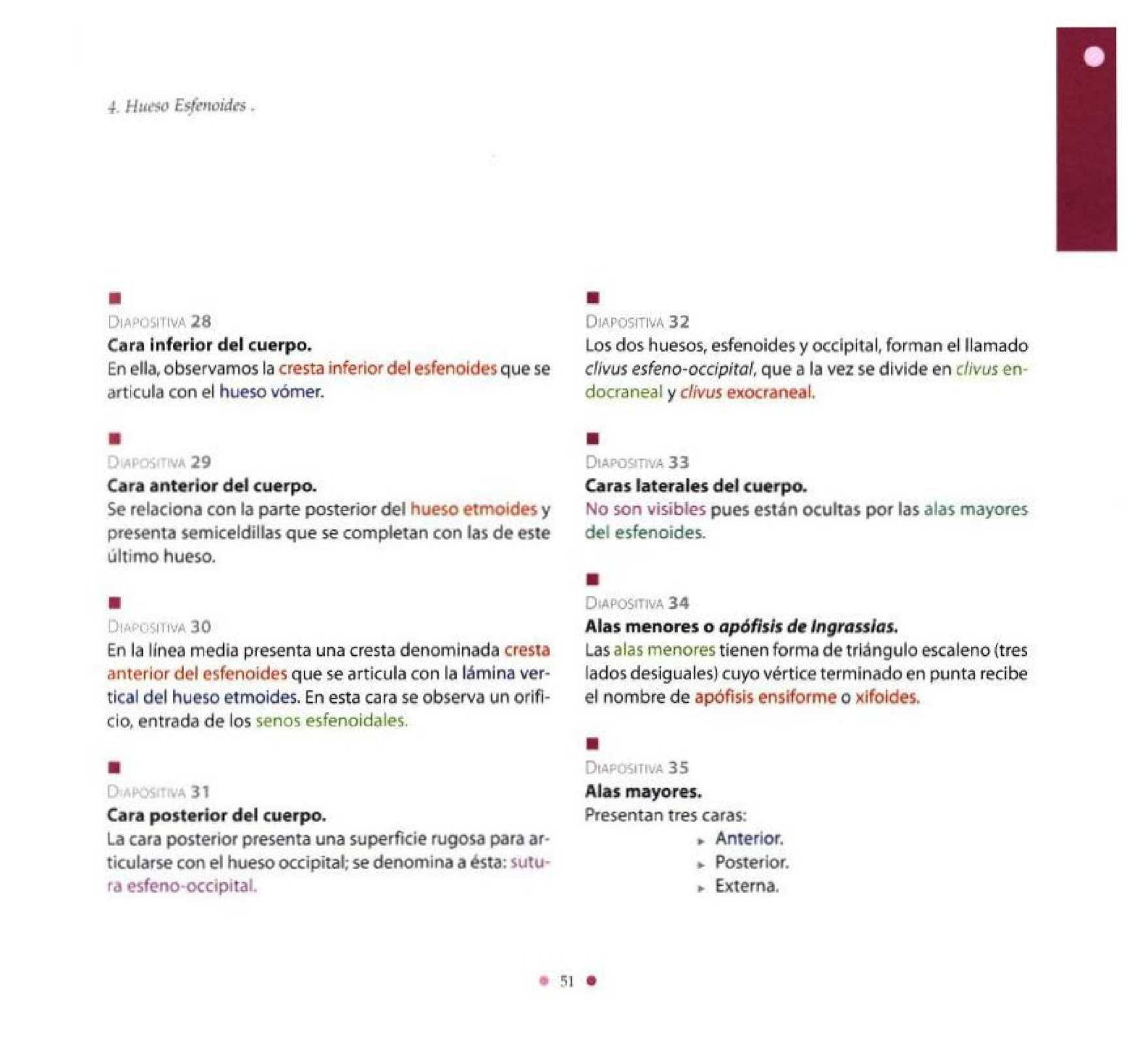 Anatomia Radiologica en Norma Lateral - CALAMEO Downloader