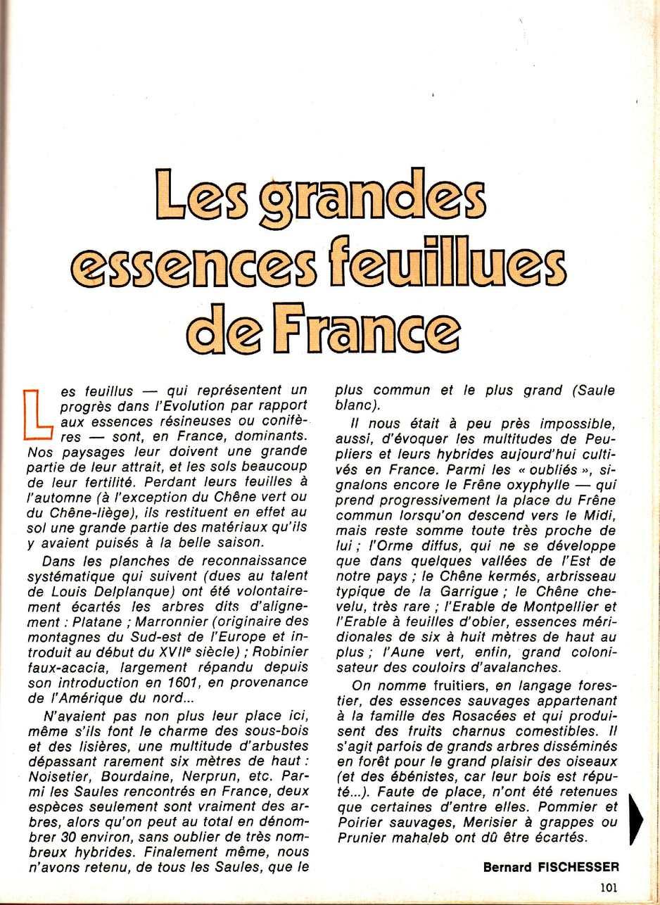 Les grandes essences feuillues en France