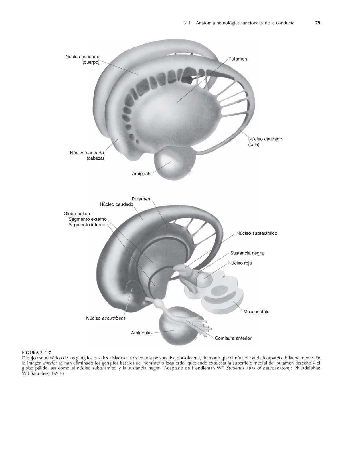 Fantástico Endoscópica Del Tercer Anatomía Ventriculostomia Galería ...