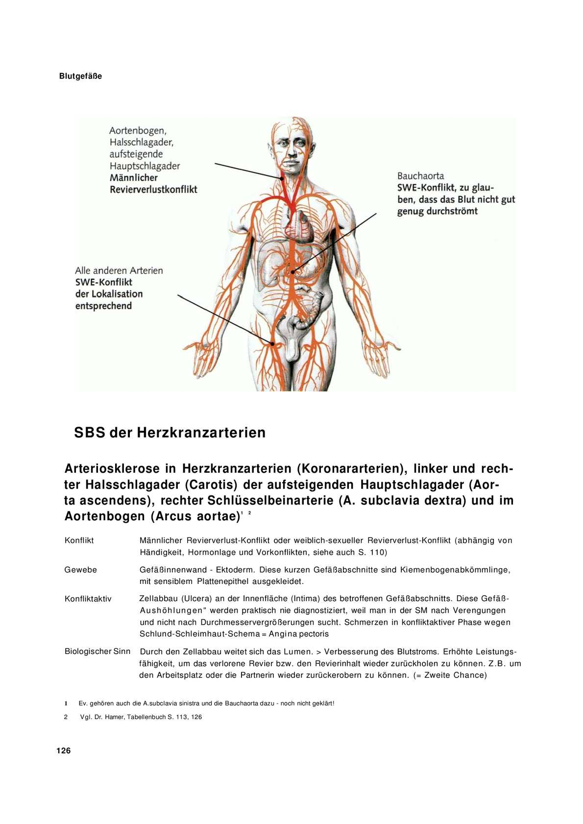 Fantastisch Blutgefäße Im Menschlichen Körper Fotos - Anatomie Ideen ...