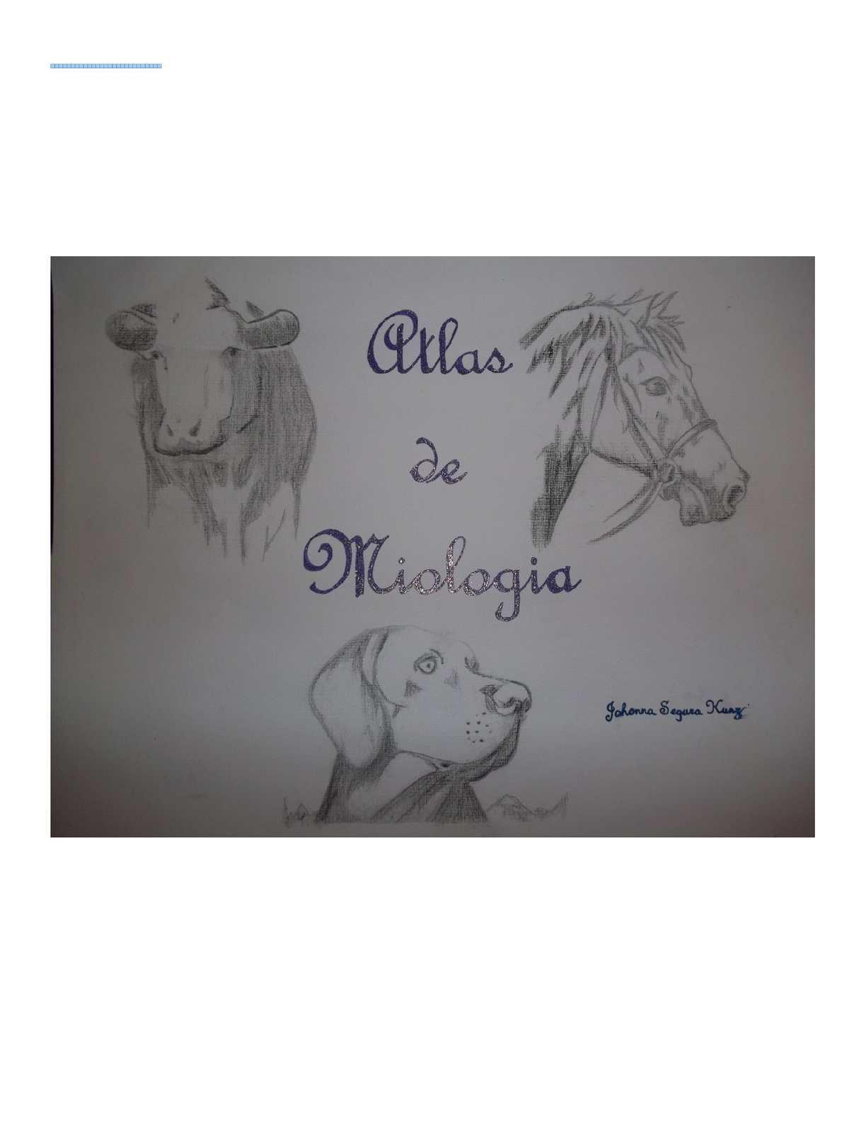 Calaméo - ATLAS DE MIOLOGÍA