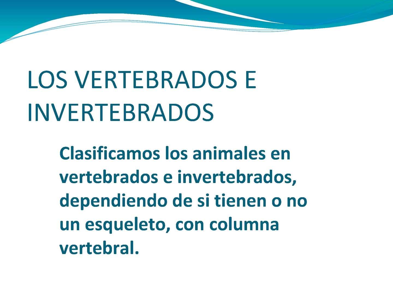 Calaméo - los vertebrados e invertebrados