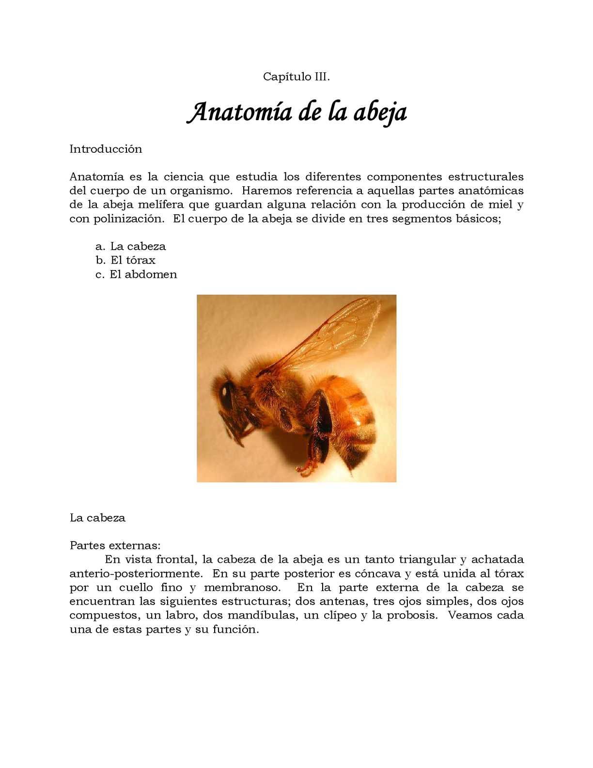 Calaméo - Anatomia Apis