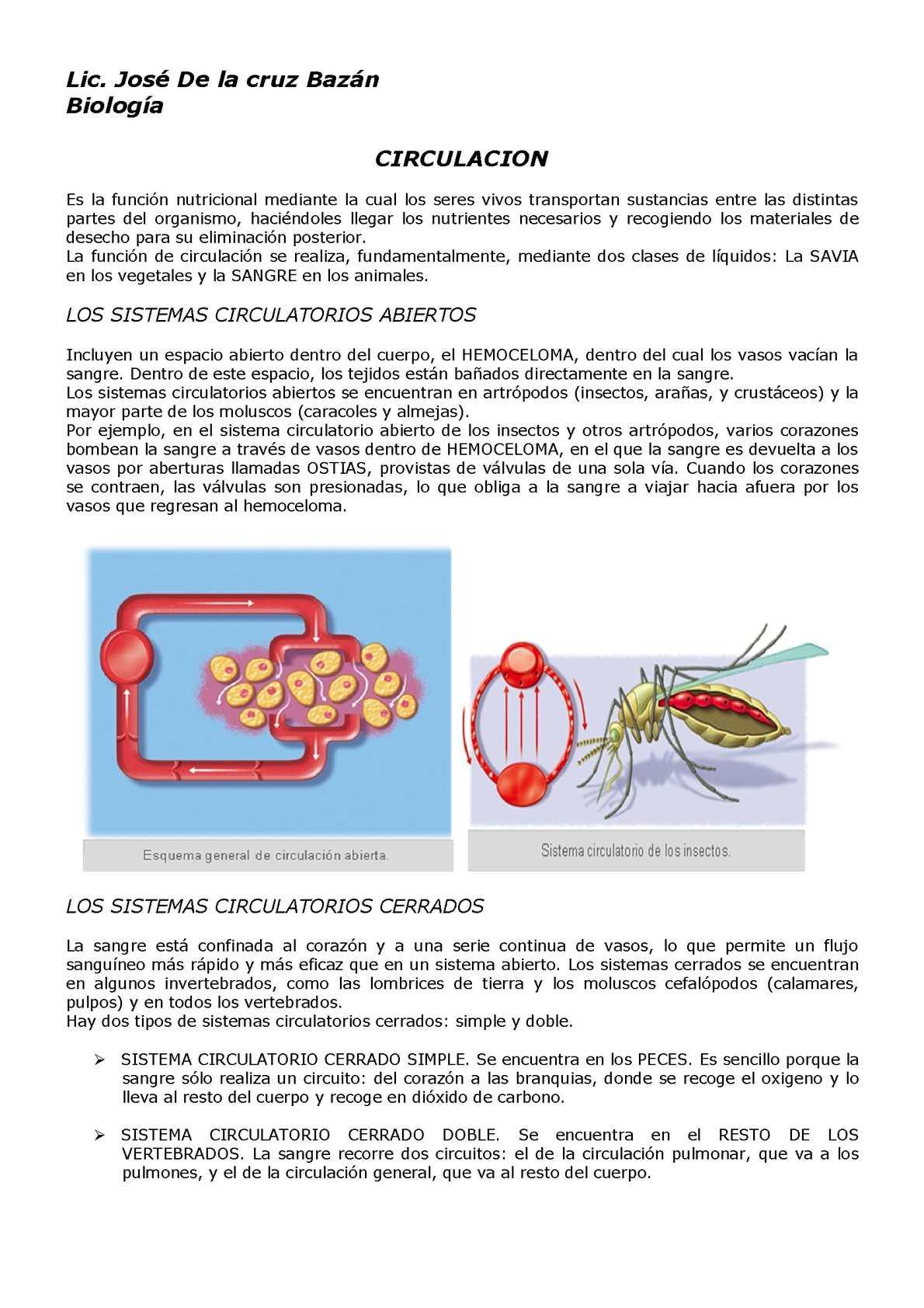 Circuito Sanguineo : Calaméo circulacion