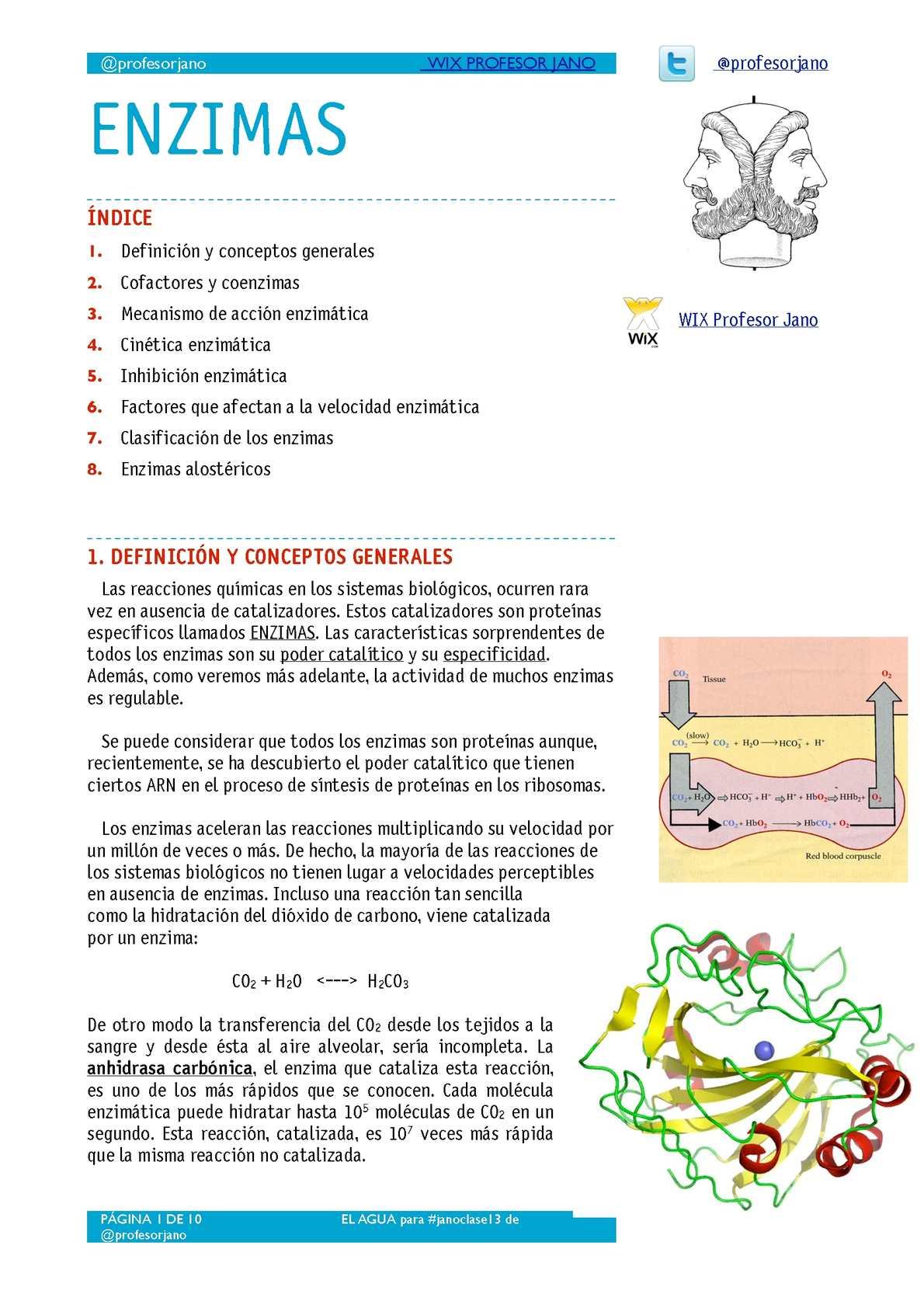 APUNTES ENZIMAS - 2º BACH