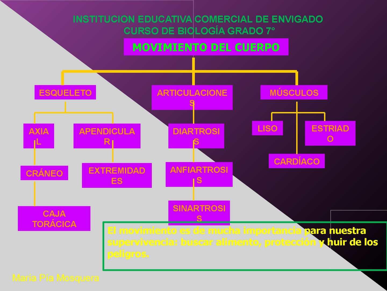 Calaméo - presentacion Sistemaosteomuscular