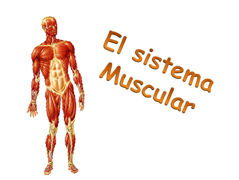 Calaméo - sistema muscular y esquelético