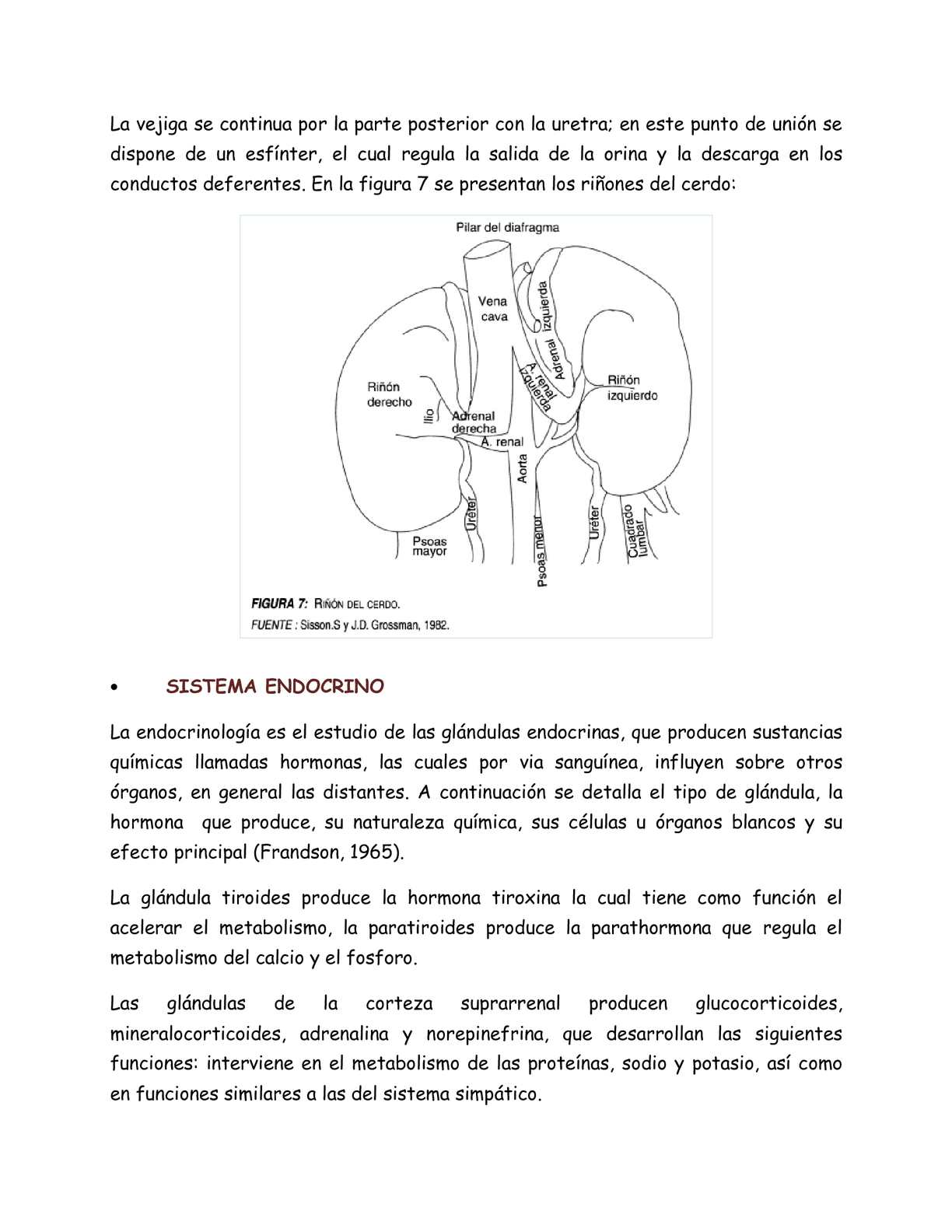 Famoso Anatomía Cerdo Fetal Y Funciones Adorno - Anatomía de Las ...