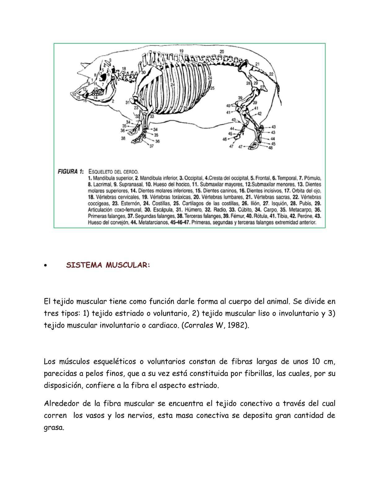 Magnífico Prueba Anatomía Cerdo Fetal Galería - Imágenes de Anatomía ...