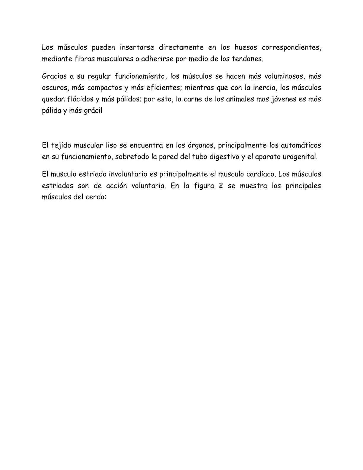 Lujo Anatomía Cerdo Fetal Ilustración - Anatomía de Las Imágenesdel ...