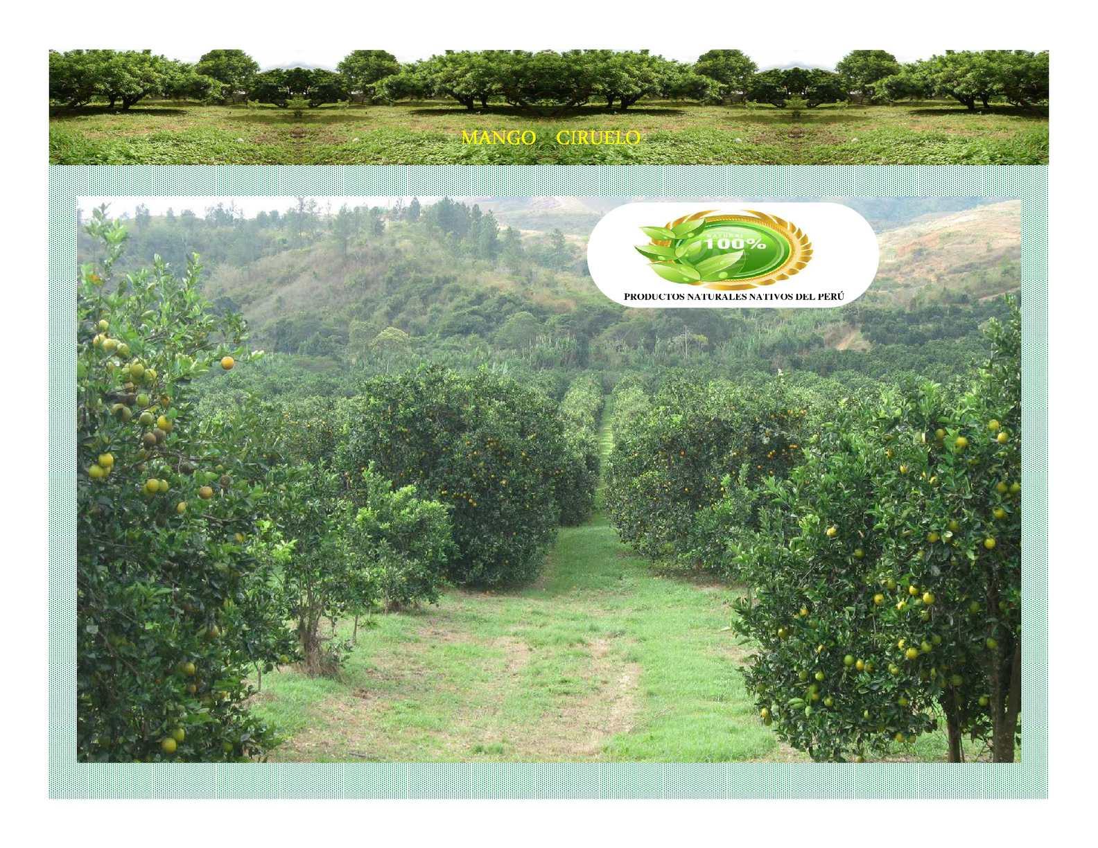 Mango Ciruelo Norteño Piurano