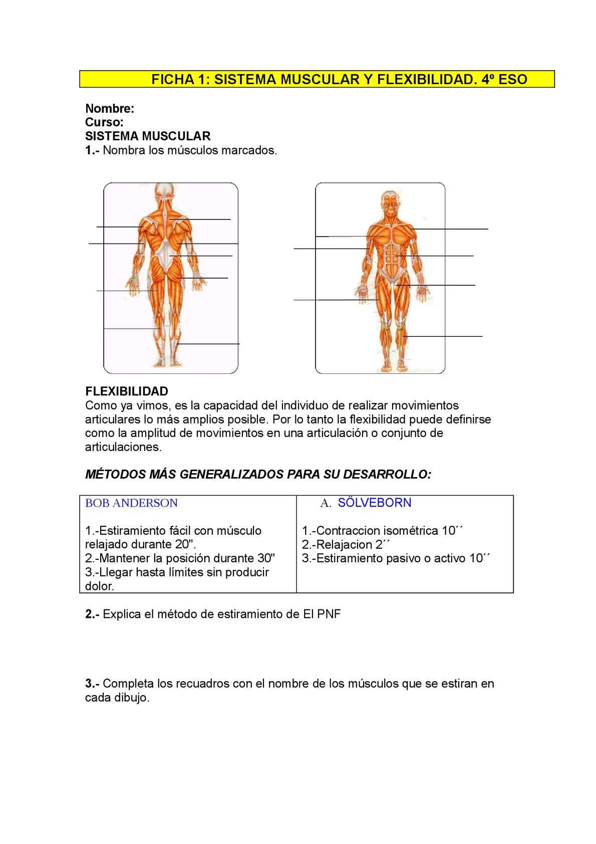 Calaméo - cuerpo humano y flexibilidad 4º eso