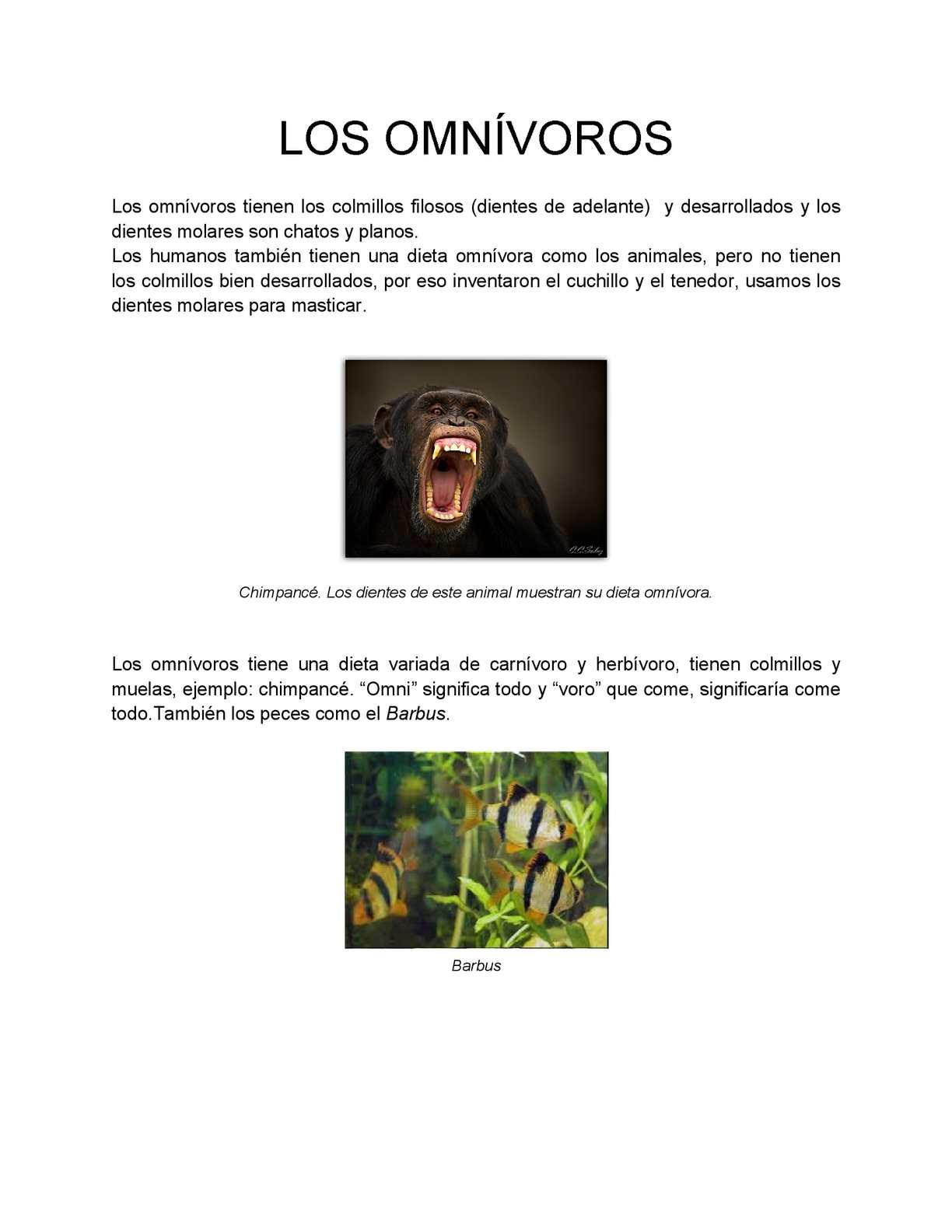 Calaméo - Los Omnívoros