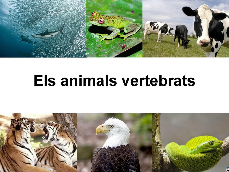 Els animals vertebrats
