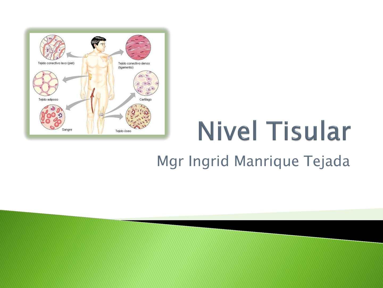 Calaméo - Clase 04 Anatomia y fisiologia Nivel Tisular