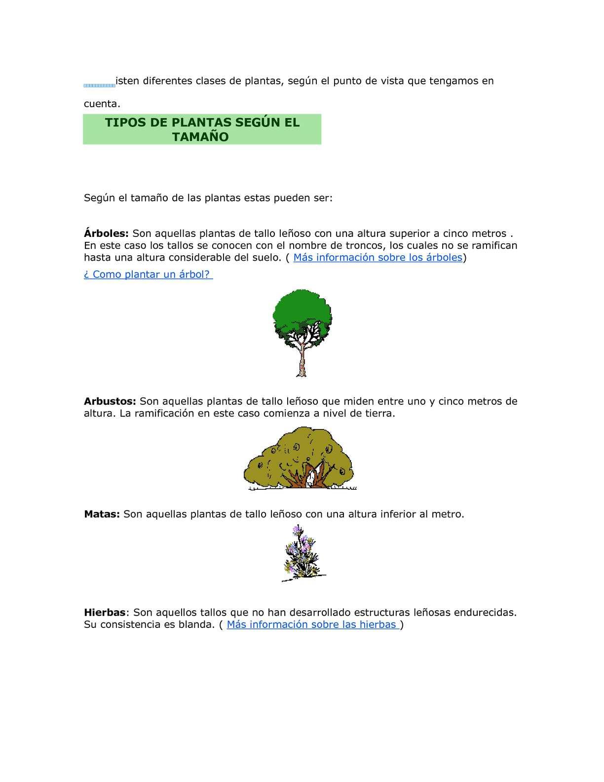 Calam o las plantas for Cuales son los tipos de plantas