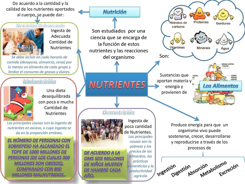 Calam o mapa conceptual nutrientes y dieta balanceada for Que es una oficina y sus caracteristicas