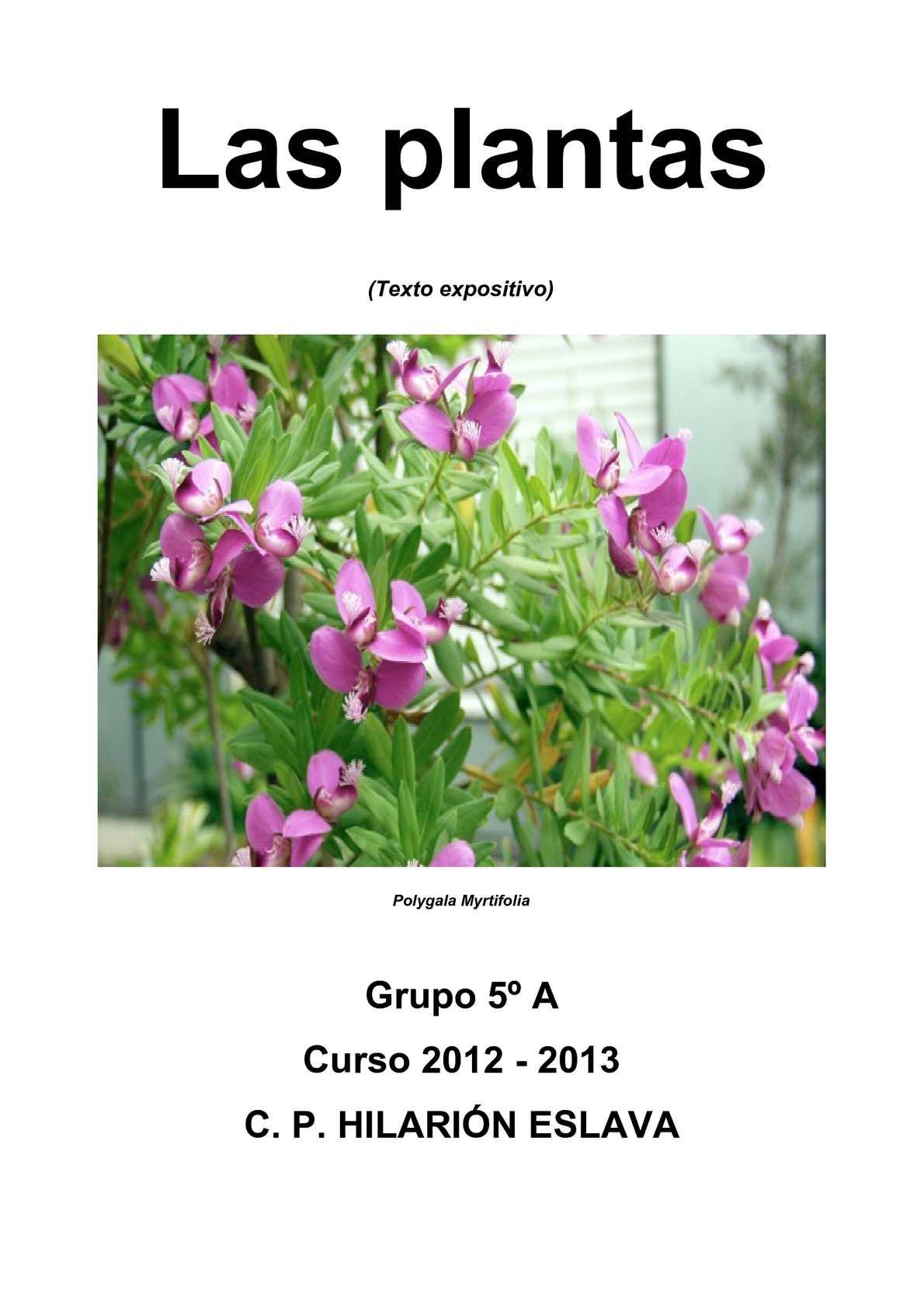 Calam o las plantas for Plantas ornamentales ejemplos