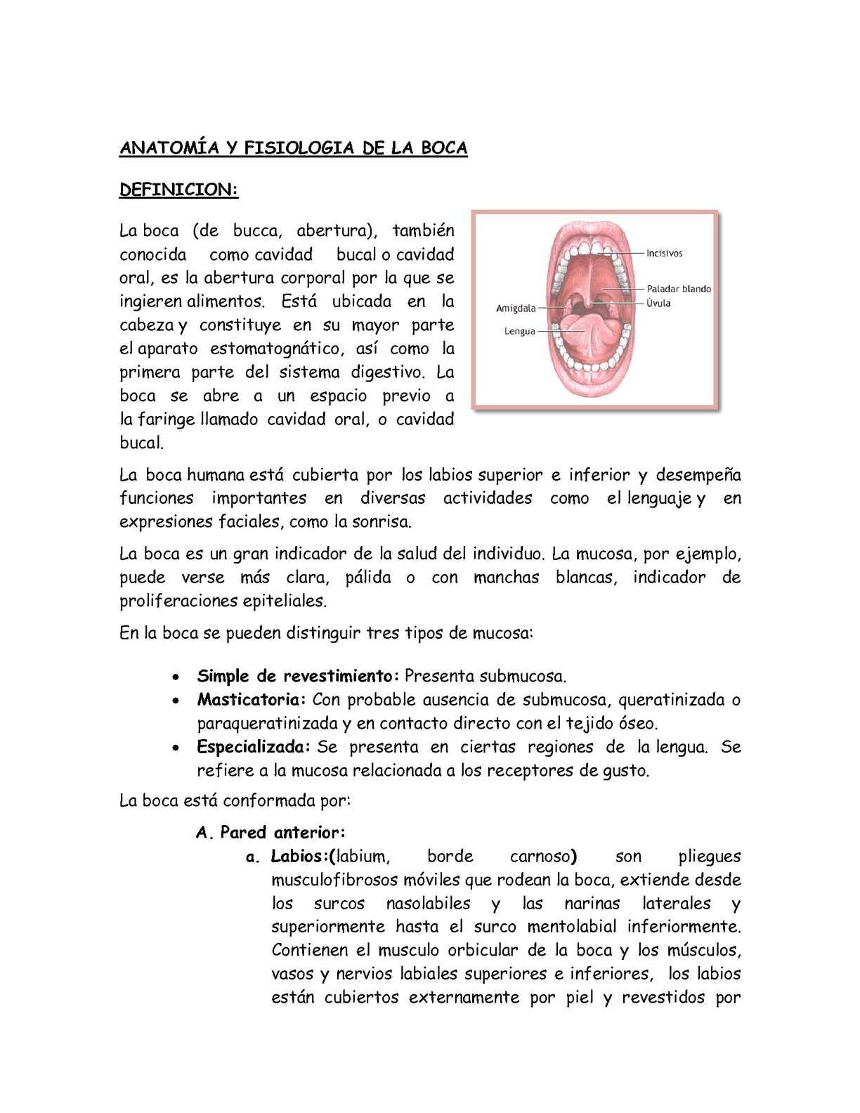 Calaméo - semiologia boca