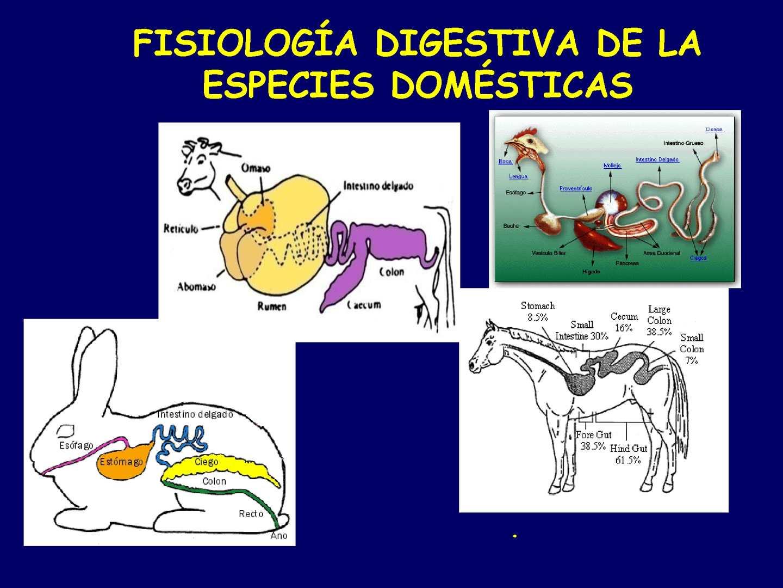 Calaméo - Clasificacion de los Animales segun su Alimentacion