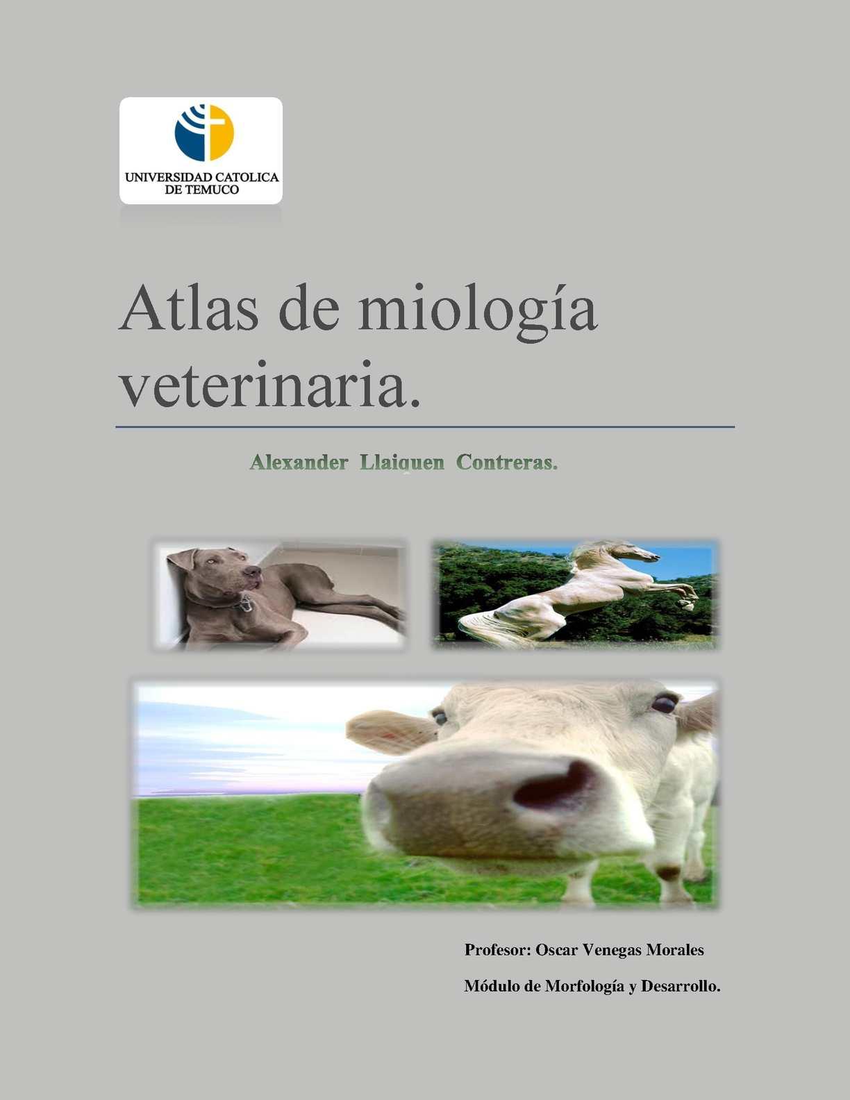 Calaméo - Atlas de Miologia Veterinaria ( bovino,equino y canino).