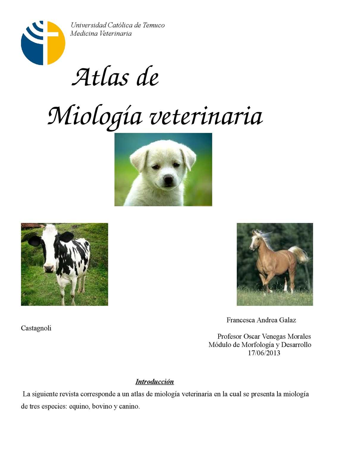 Calaméo - Atlas de anatomía veterinaria