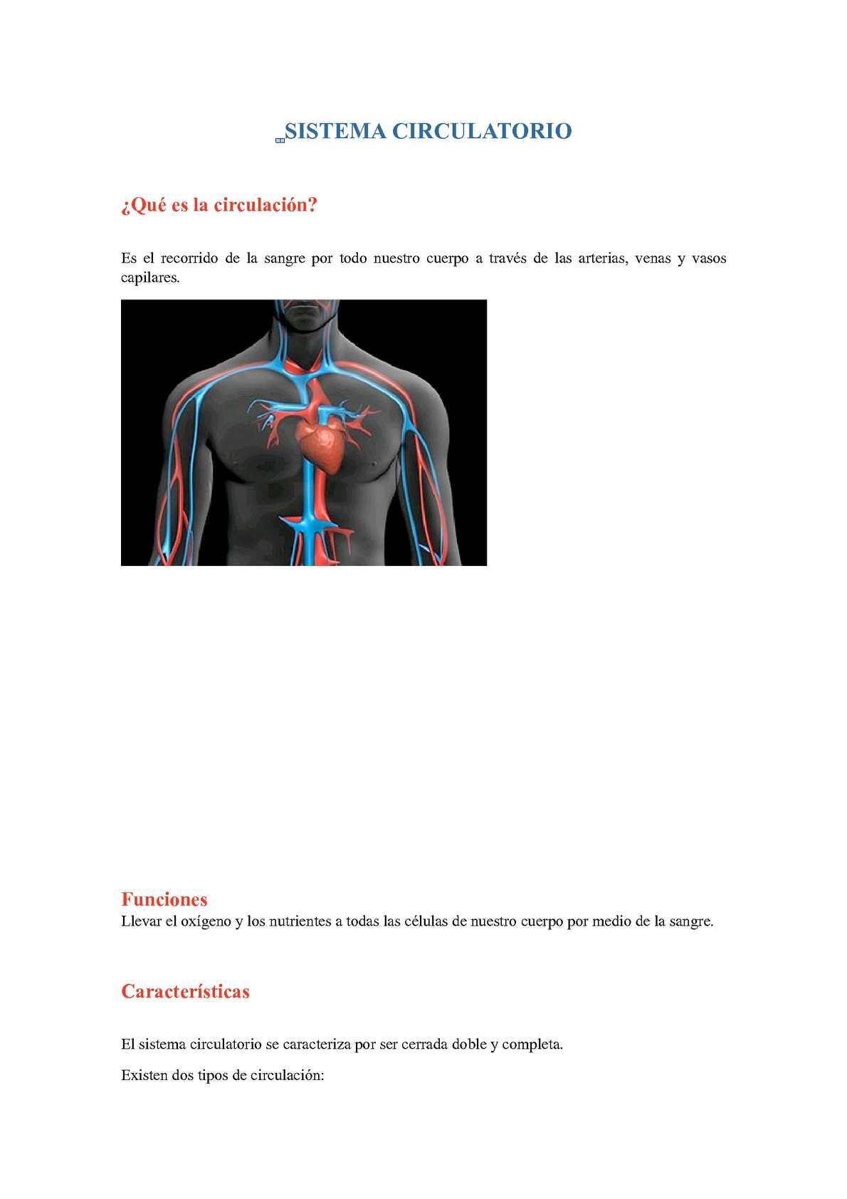 Calaméo - Sistema Circulatorio