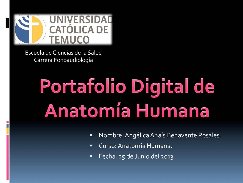 Calaméo - Portafolio Digital Anatomía Humana Anais Benavente