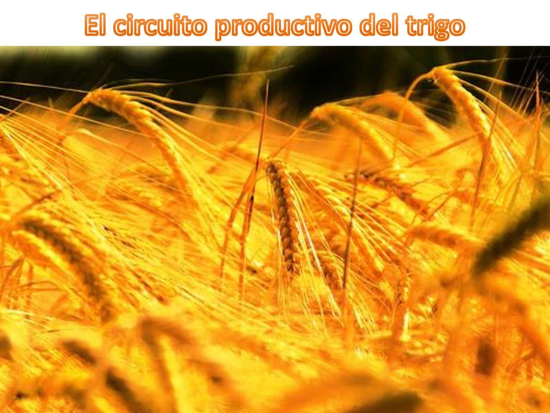 Circuito Productivo Del Trigo : Calaméo clase sobre el circuito productivo del trigo º a