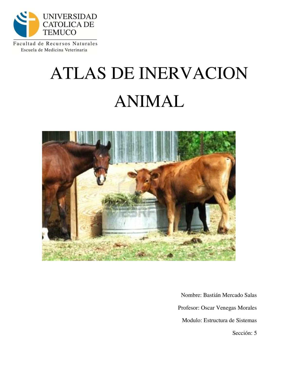 Calaméo - Atlas de Inervación Animal